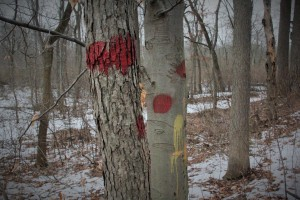 Some of the trees have a lot of paint on them.  I guessing that it's not all from trail maintenance.