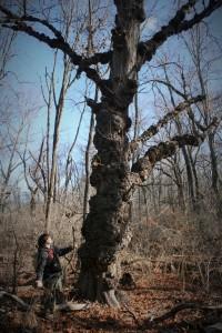 Weird tree.