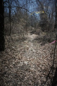 Note the ribbons to mark the trails.