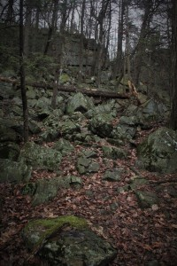 """The next stretch of trail, the guidebook warned of a """"steep trail.""""  I thought this was it.  I was wrong.  The real one was almost a wall."""