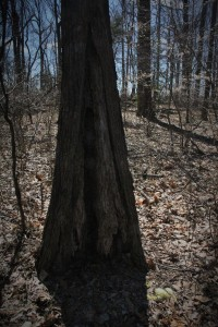 How do trees do this and still stand up?