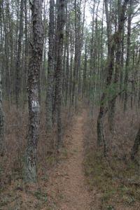 Fun trail.