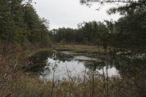 Bit of a pond.