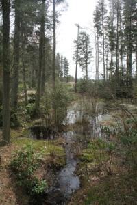 I want a yard swamp!