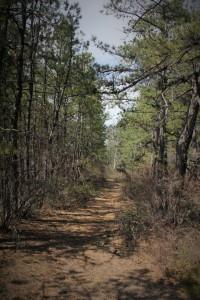 Nice pines.