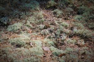 The Wurst moss.