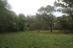 Nice meadow.