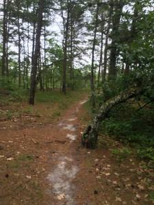 Mullica River Trail - Atsion to Batsto, NJ - Backpack or