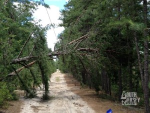 A tree rests on power lines on the first road you cross on the white trail. (From the big storm a week or two prior!)