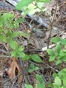 A little frog well camouflaged