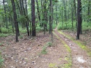 Moss-bordered path