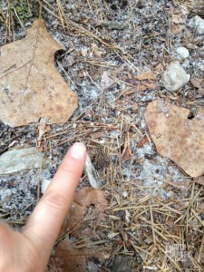 Spot the tiny frog.  I placed my finger next to him/her, so you could get an idea of how small he/she is!