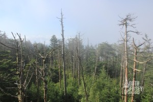 Summit woods.