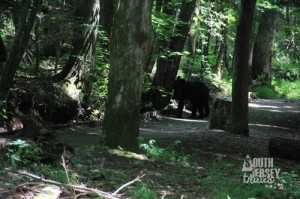 Even bears stop at visitor's centers.