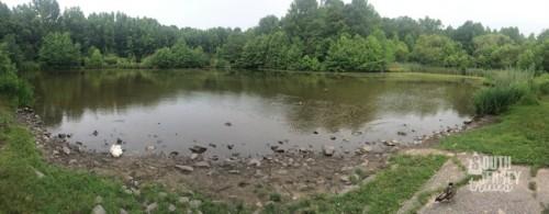 Pond is nice looking too.