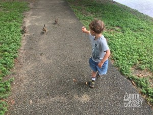 Someone getting mad at the ducks for following him.