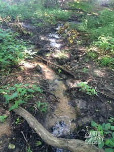 Trickle of a stream that this crosses.