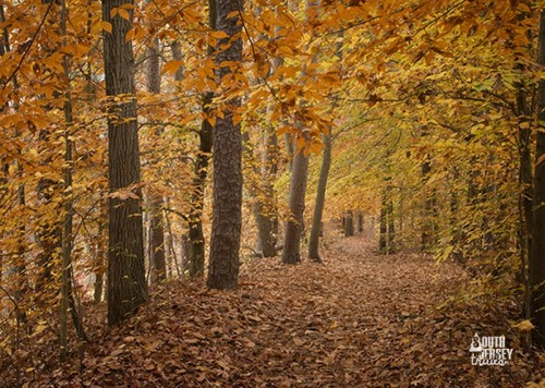 southjerseytrails-ceres-park-fall-foliage-leaves-11-2015
