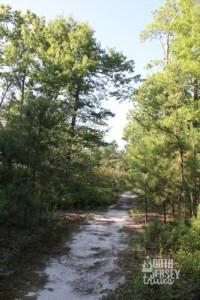 swamptrail28
