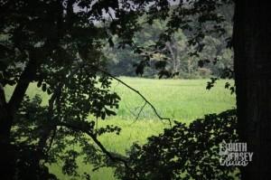 Glimpses of marsh.