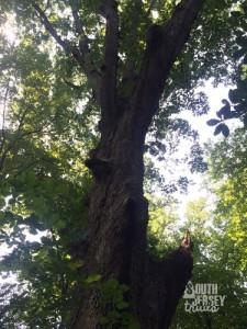 Really huge tree.
