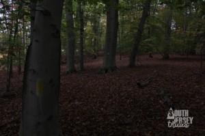 littlewoods14
