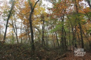 littlewoods32