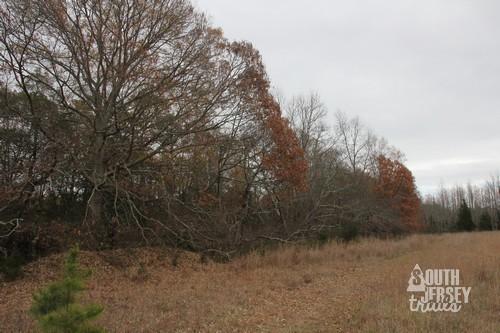 cmwrcedarswamp15.jpg
