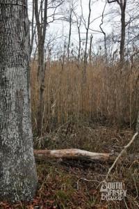 cmwrcedarswamp23