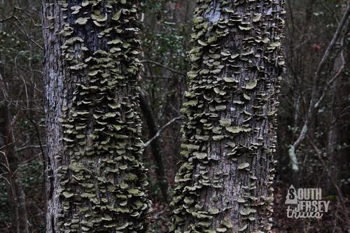 cmwrcedarswamp24.jpg