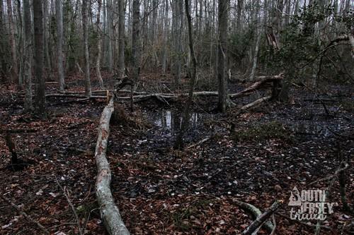 cmwrcedarswamp28.jpg