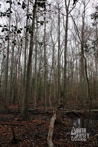cmwrcedarswamp29.jpg