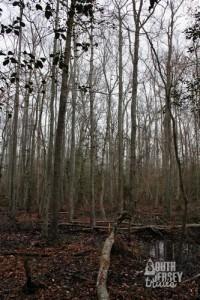 cmwrcedarswamp29
