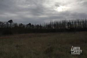 cmwrcedarswamp36