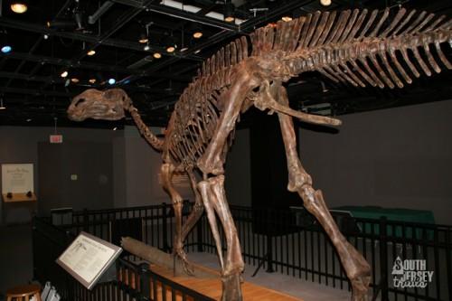 hadrosaurus19