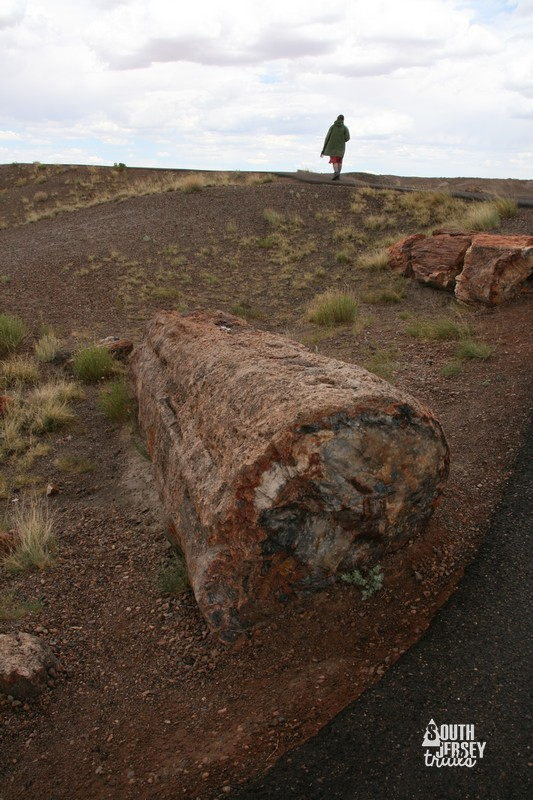 petrifiedforest01